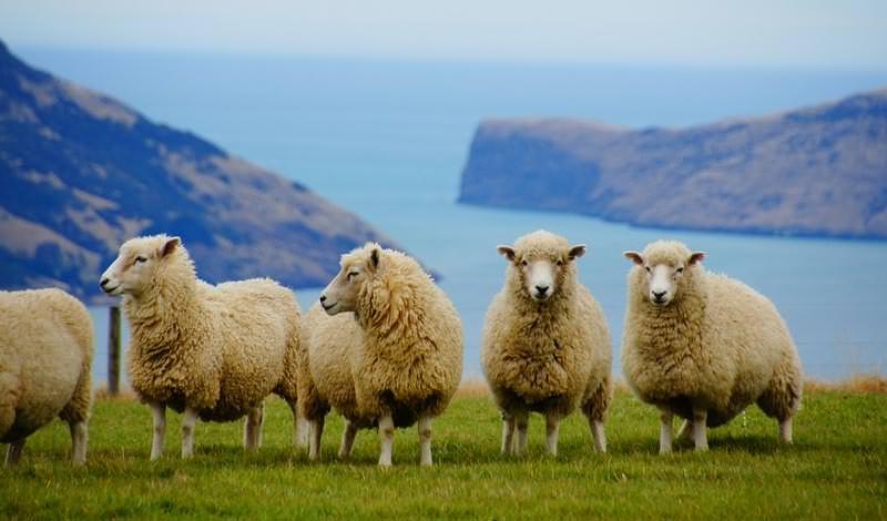 טיולי ג'יפים לניו זילנד