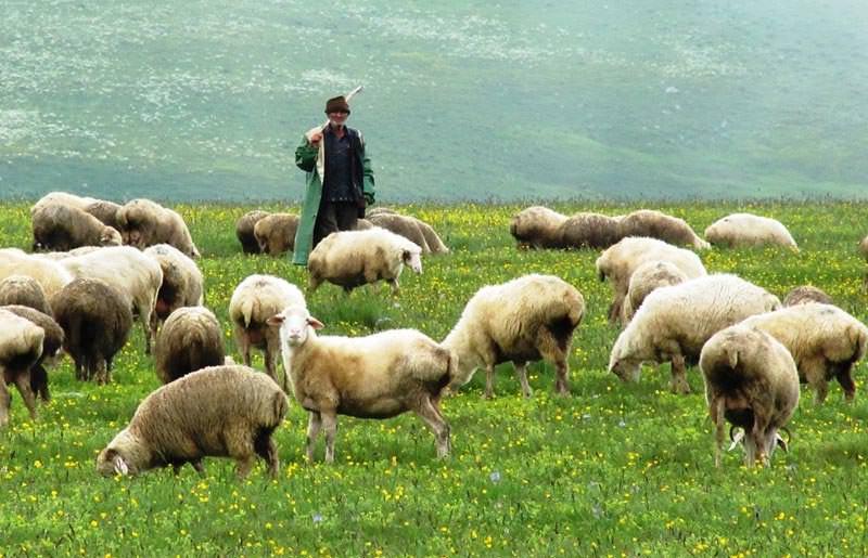 טיול משפחות בגאורגיה - 8 ימים - מסע ג'יפים בקווקז הקטן והגדול
