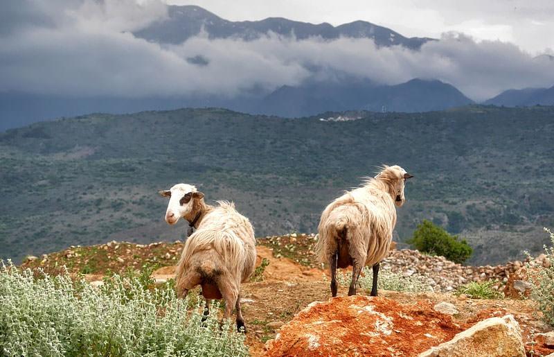 טרק ביוון - 6 ימים - טיול הליכה מחבל אבריטניה למטאורה