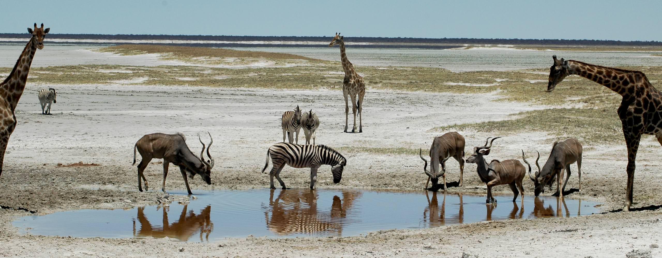 טיול ג'יפים לנמיביה - 12 יום - טיול במדבר היפה בעולם