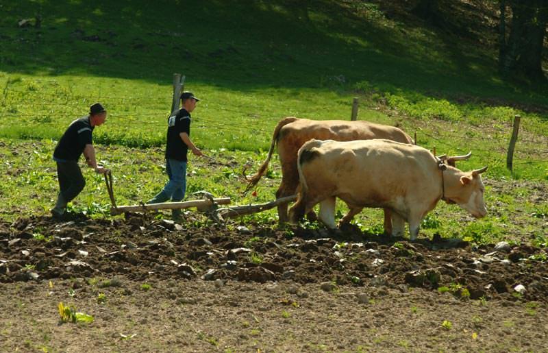 טיול ג'יפים לרומניה - 7 ימים - מסע חוצה קרפטים
