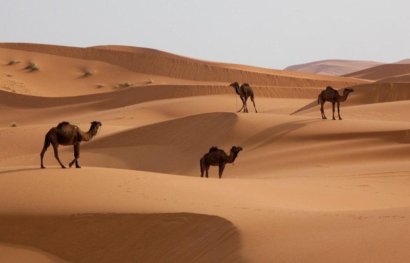 13 ימים מסעירים במרוקו